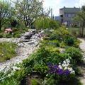 Navrh a realizace zahrady u novostavby rodinneho domu dscf0066