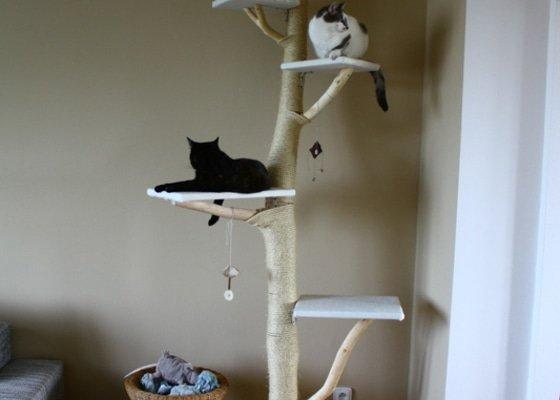Kočičí strom