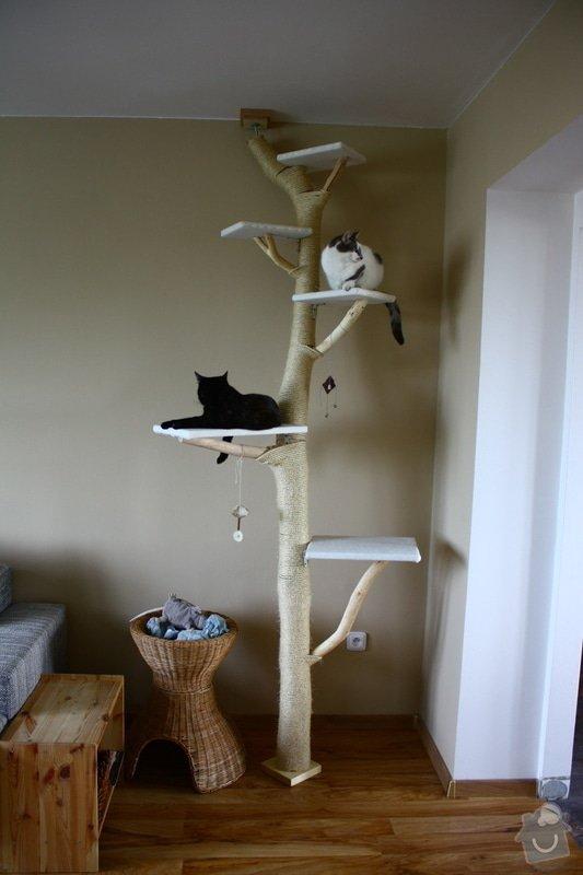 Kočičí strom: IMG_8508