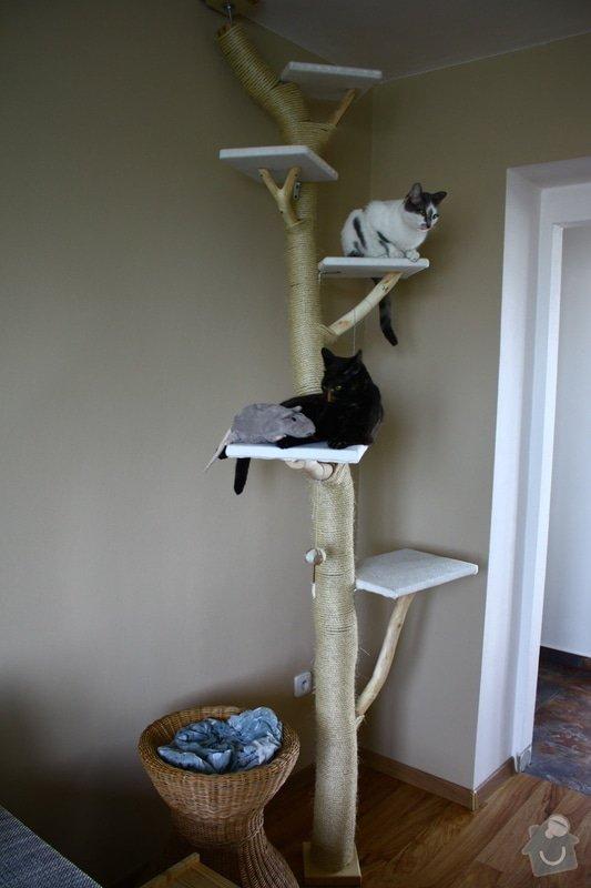 Kočičí strom: IMG_8509