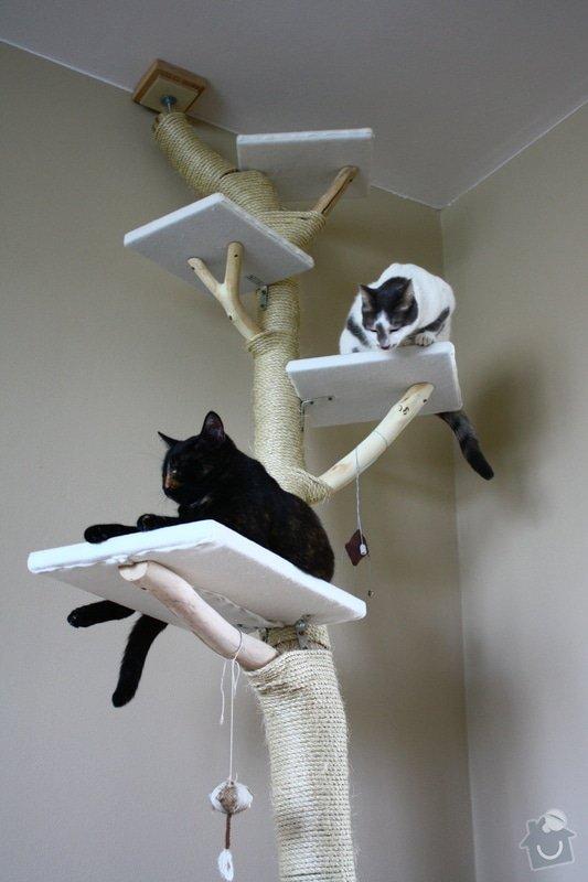 Kočičí strom: IMG_8507