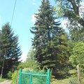 Kaceni ohrozujiciho stromu p6070167