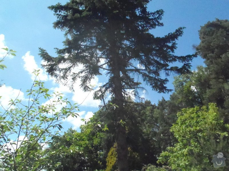 Kácení ohrožujicího stromů: P6070169