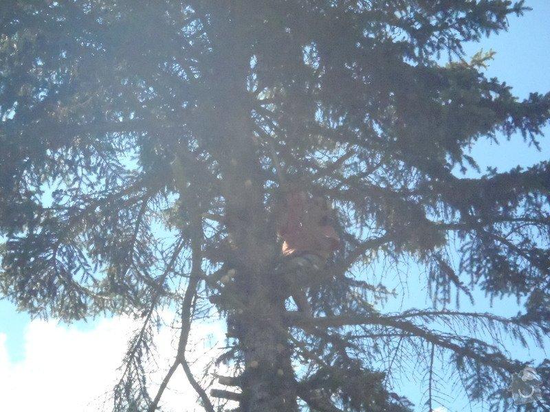 Kácení ohrožujicího stromů: P6070172