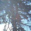 Kaceni ohrozujiciho stromu p6070172