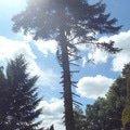 Kaceni ohrozujiciho stromu p6070175