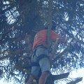 Kaceni ohrozujiciho stromu p6070179