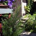 Zednicke prace venkovni dlazba domek l to 2008 009