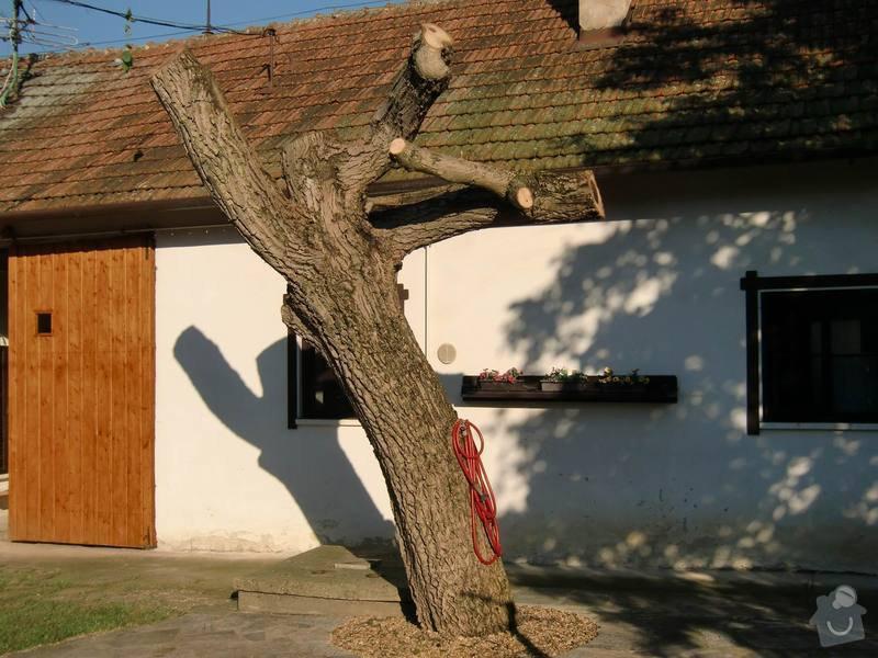 Rizikové kácení: omlazeny_strom
