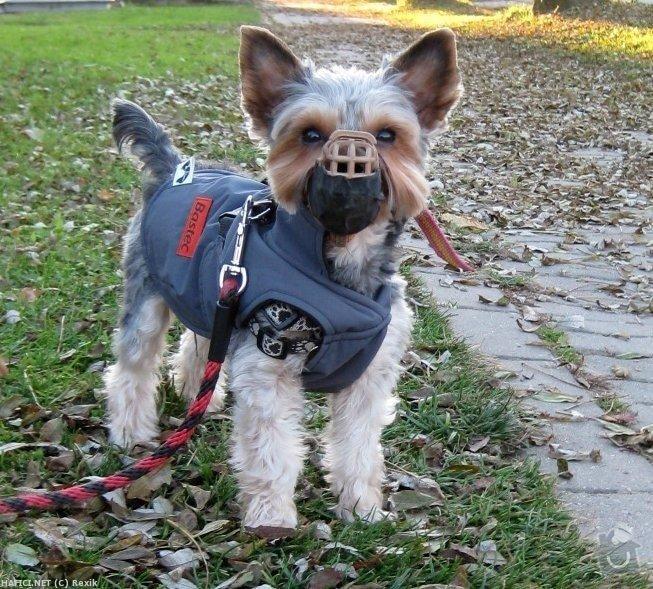 Stříhání psů: 310