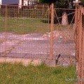 Rekonstrukce oploceni bytoveho domu 08102010206