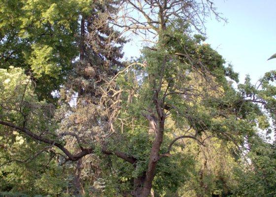 Odborné ošetření vzrostlých stromů a dalších dřevin na zahradě