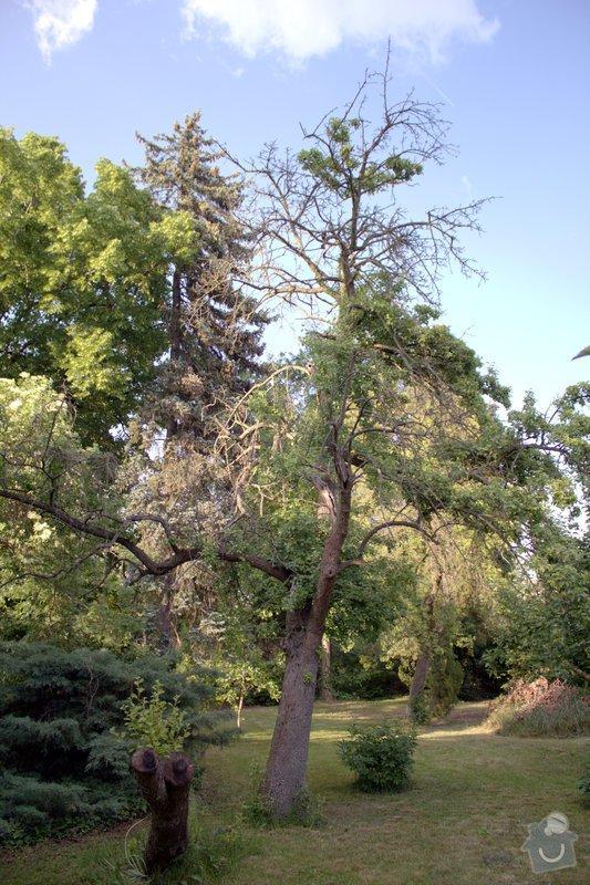 Odborné ošetření vzrostlých stromů a dalších dřevin na zahradě: IMG_2566