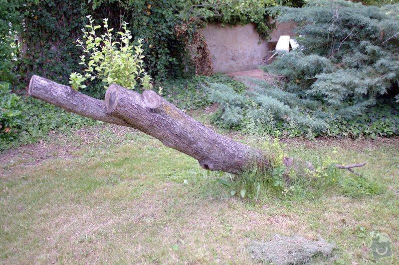 Odborné ošetření vzrostlých stromů a dalších dřevin na zahradě: IMG_2567