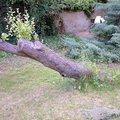Odborne osetreni vzrostlych stromu a dalsich drevin na zahrad img 2567