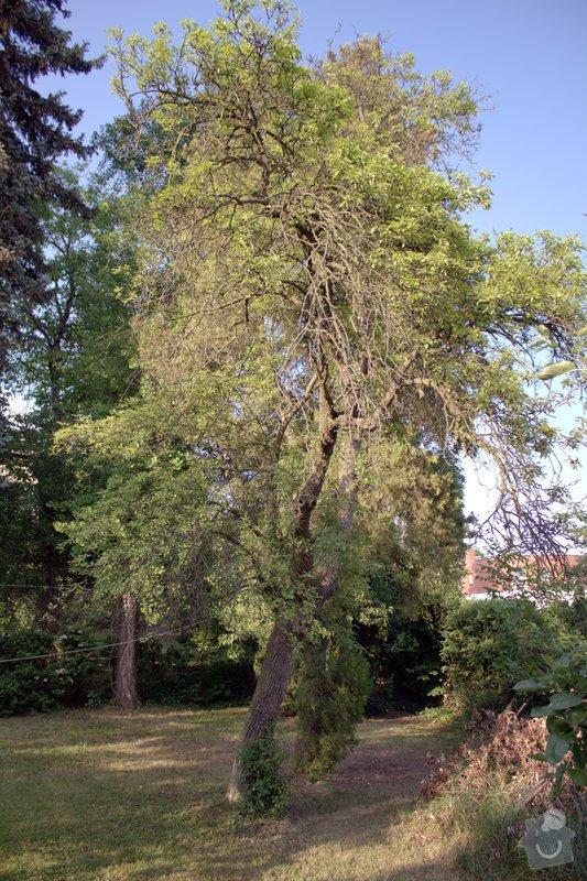 Odborné ošetření vzrostlých stromů a dalších dřevin na zahradě: IMG_2570