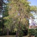 Odborne osetreni vzrostlych stromu a dalsich drevin na zahrad img 2570