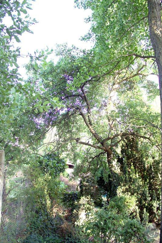 Odborné ošetření vzrostlých stromů a dalších dřevin na zahradě: IMG_2573