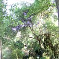 Odborne osetreni vzrostlych stromu a dalsich drevin na zahrad img 2573