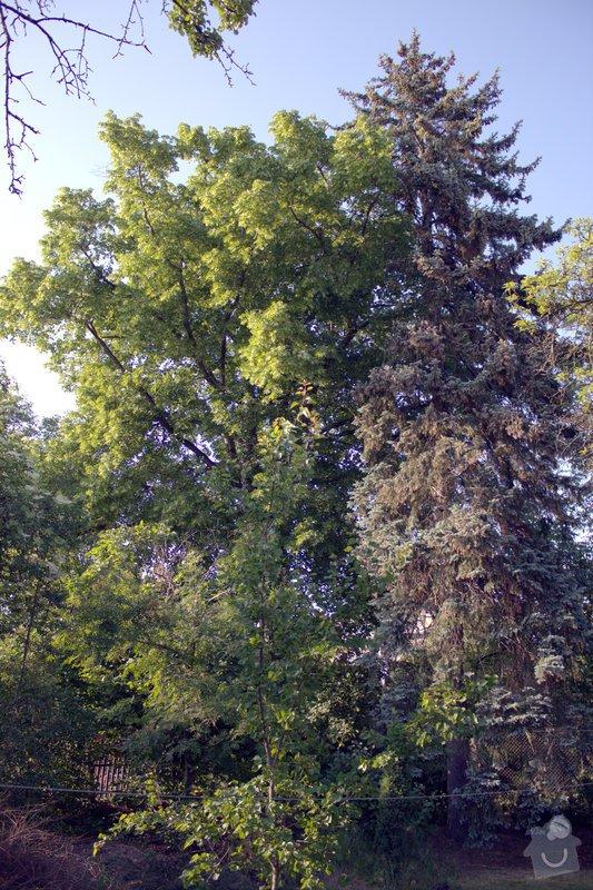 Odborné ošetření vzrostlých stromů a dalších dřevin na zahradě: IMG_2579