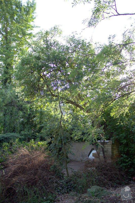 Odborné ošetření vzrostlých stromů a dalších dřevin na zahradě: IMG_2582
