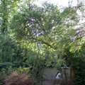 Odborne osetreni vzrostlych stromu a dalsich drevin na zahrad img 2582
