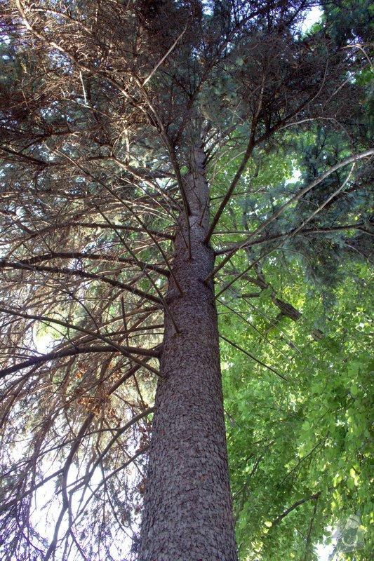 Odborné ošetření vzrostlých stromů a dalších dřevin na zahradě: IMG_2589