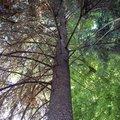 Odborne osetreni vzrostlych stromu a dalsich drevin na zahrad img 2589