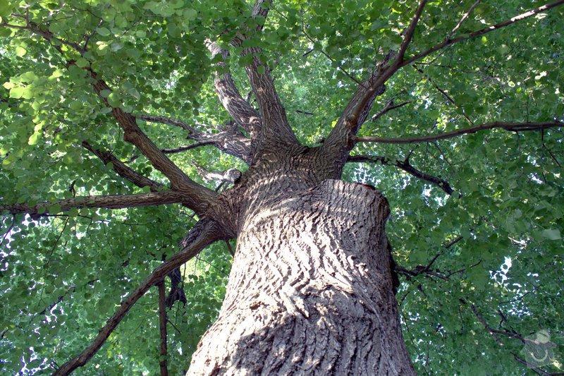 Odborné ošetření vzrostlých stromů a dalších dřevin na zahradě: IMG_2590