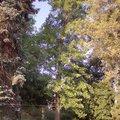 Odborne osetreni vzrostlych stromu a dalsich drevin na zahrad img 2576