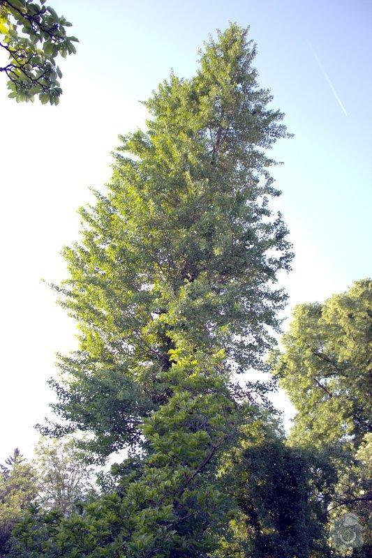 Odborné ošetření vzrostlých stromů a dalších dřevin na zahradě: IMG_2583