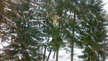 Kácení 6ti stromů mezi objekty