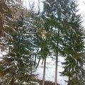 Kaceni 6ti stromu mezi objekty 20022012506