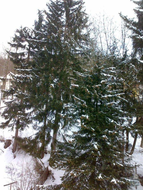 Kácení 6ti stromů mezi objekty: 20022012507