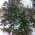 Kaceni 6ti stromu mezi objekty 20022012507