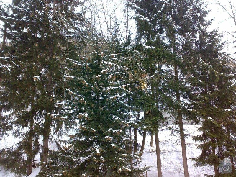 Kácení 6ti stromů mezi objekty: 20022012509