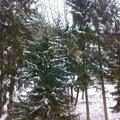 Kaceni 6ti stromu mezi objekty 20022012509