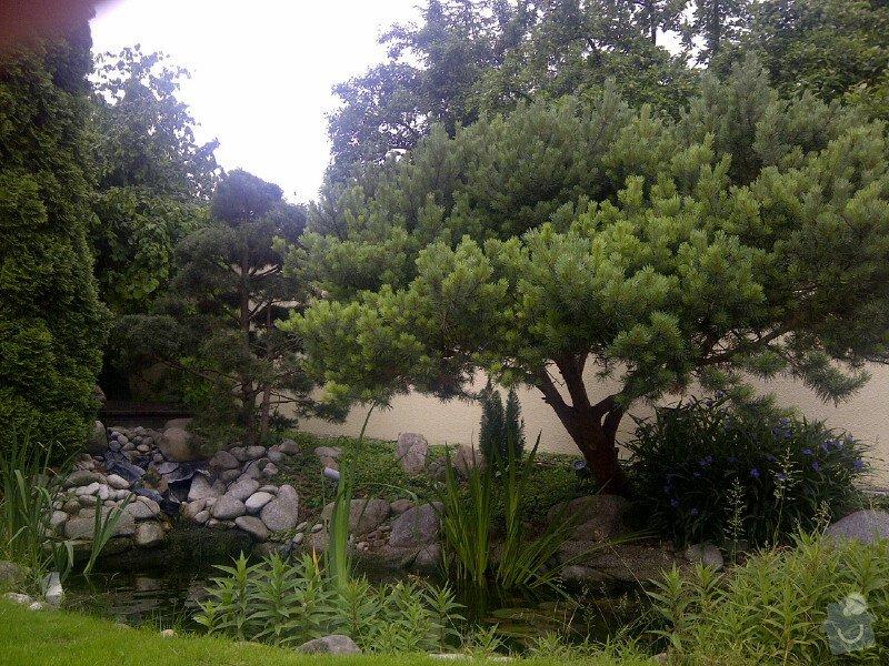 Sestříhání 8mi stromů, výška 6m: Praha-20120614-00103