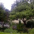 Sestrihani 8mi stromu vyska 6m praha 20120614 00103