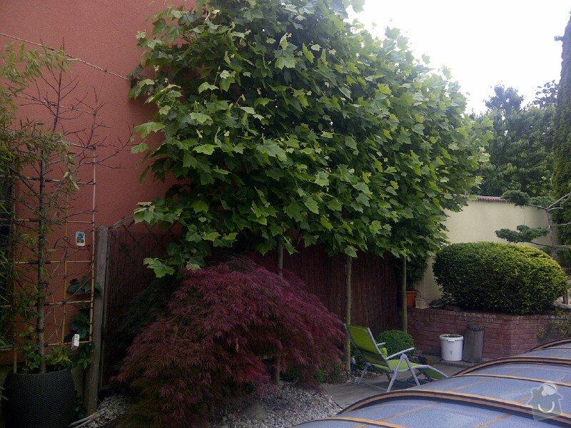 Sestříhání 8mi stromů, výška 6m: Praha-20120614-00101