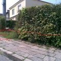 Nizka operna zidka kolem pozemku face block image006