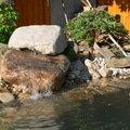 Rekonstrukce zahradniho jezirka p1470421