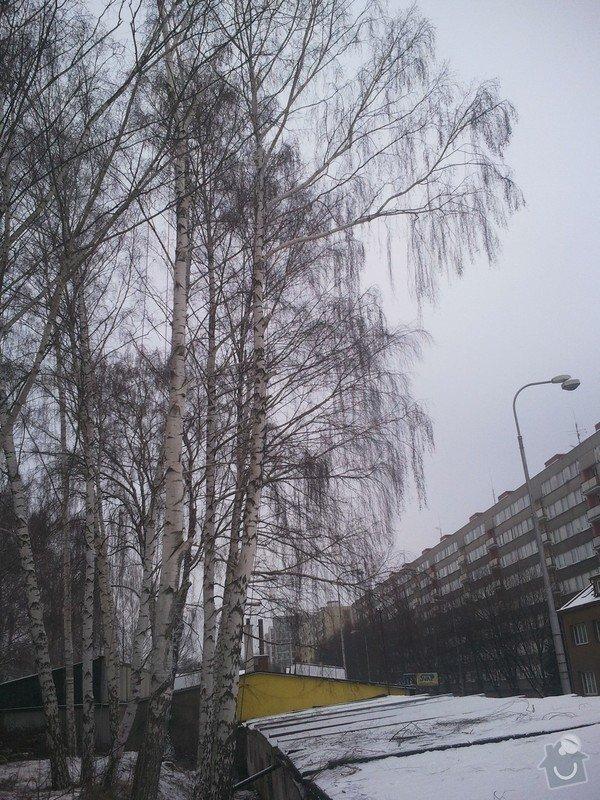 Rizikové kácení stromů: Fotografie0036