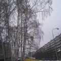 Rizikove kaceni stromu fotografie0036
