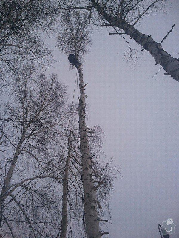Rizikové kácení stromů: Fotografie0051