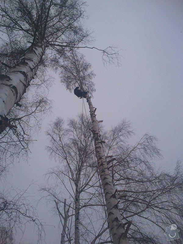 Rizikové kácení stromů: Fotografie0052