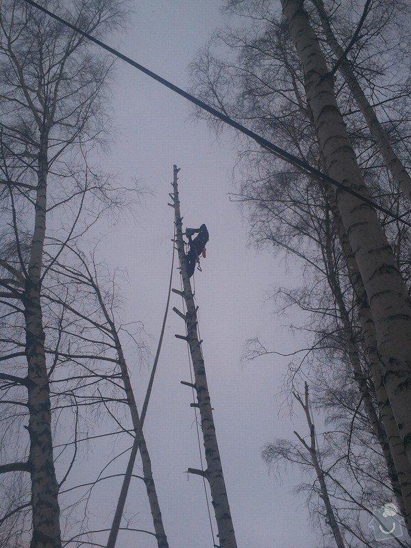 Rizikové kácení stromů: Fotografie0053