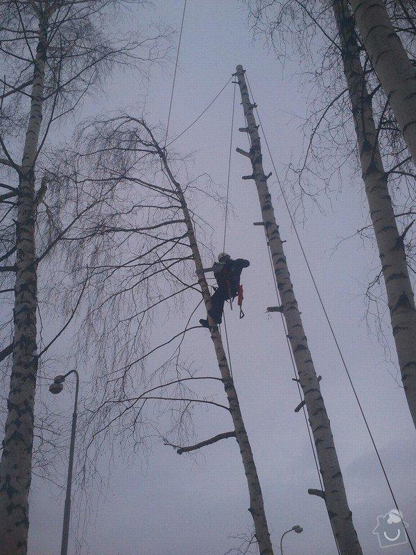 Rizikové kácení stromů: Fotografie0056