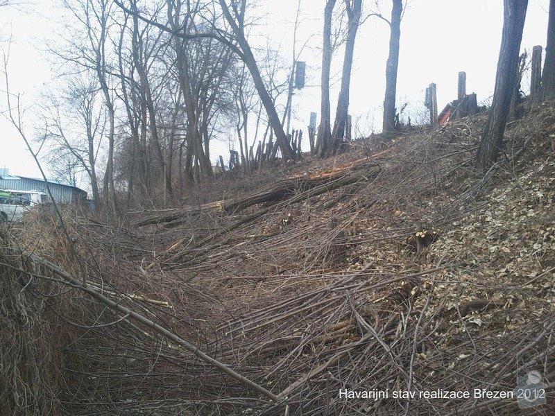 Rizikové kácení stromů: Fotografie0131