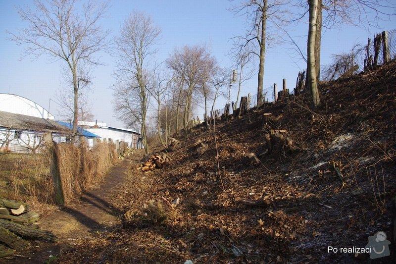 Rizikové kácení stromů: IMGP0074